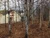 woodlandgarden3